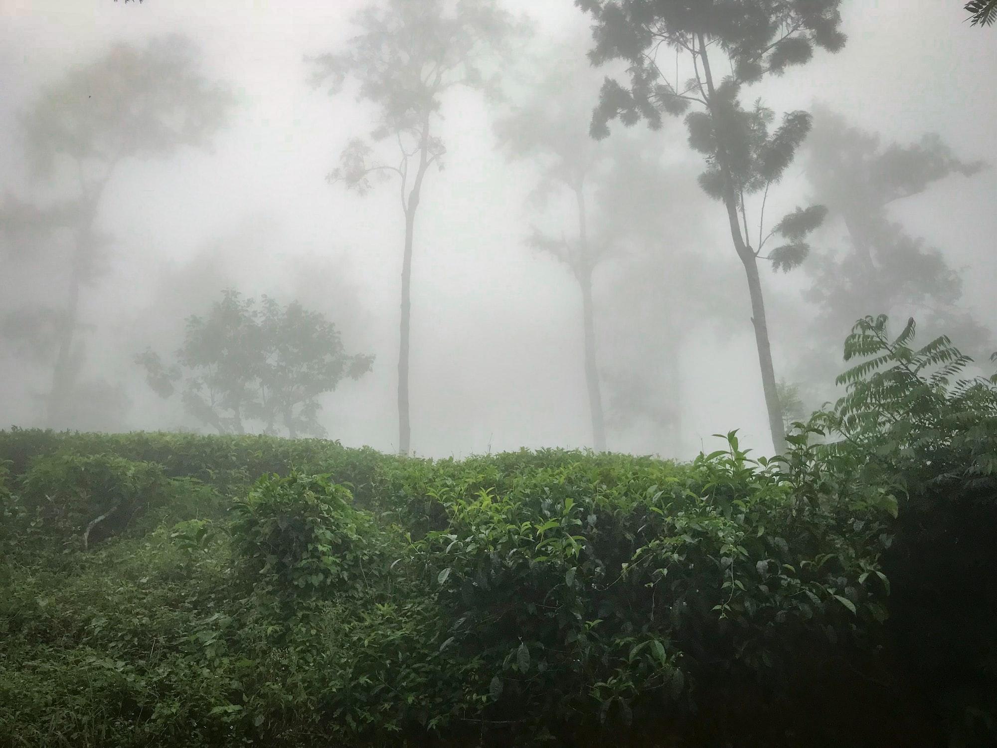 Туман в тропиках
