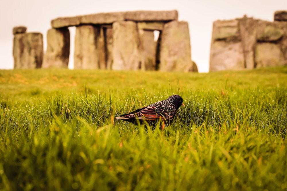 selective focus photography of bird near Stonehenge