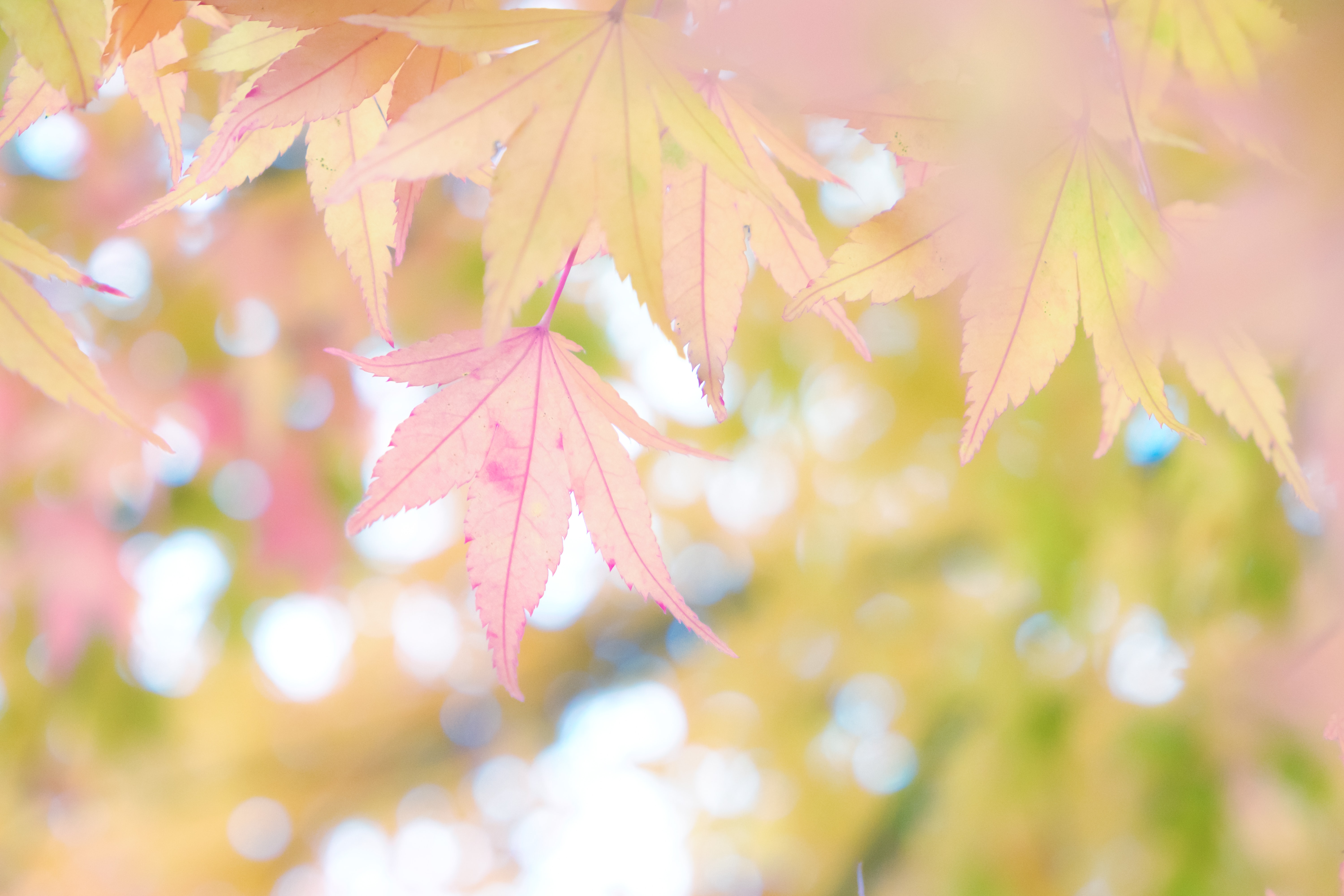 closeup photo of green and pink leaves