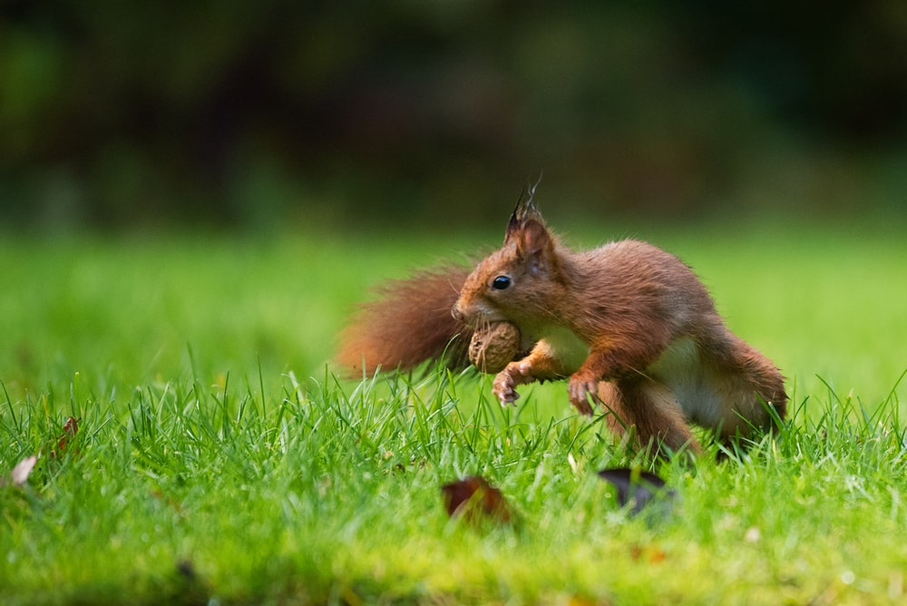 selective focus photography of squirrel eating nut