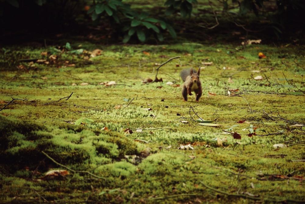 squirrel running around green grass field during daytime