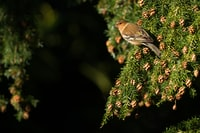focus photography of small brown bird on the leaves