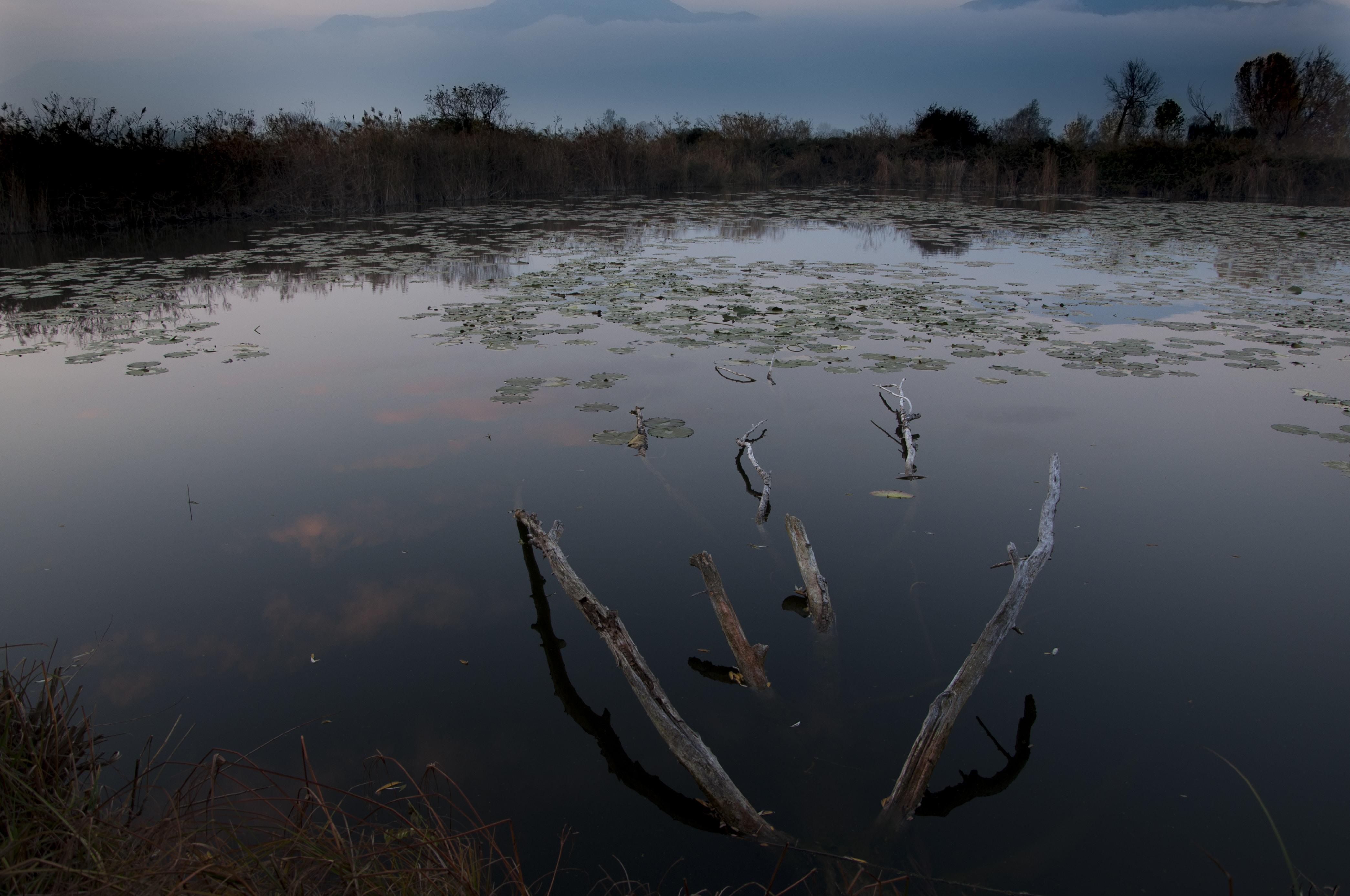 brown tree branches submerge on water taken at daytime