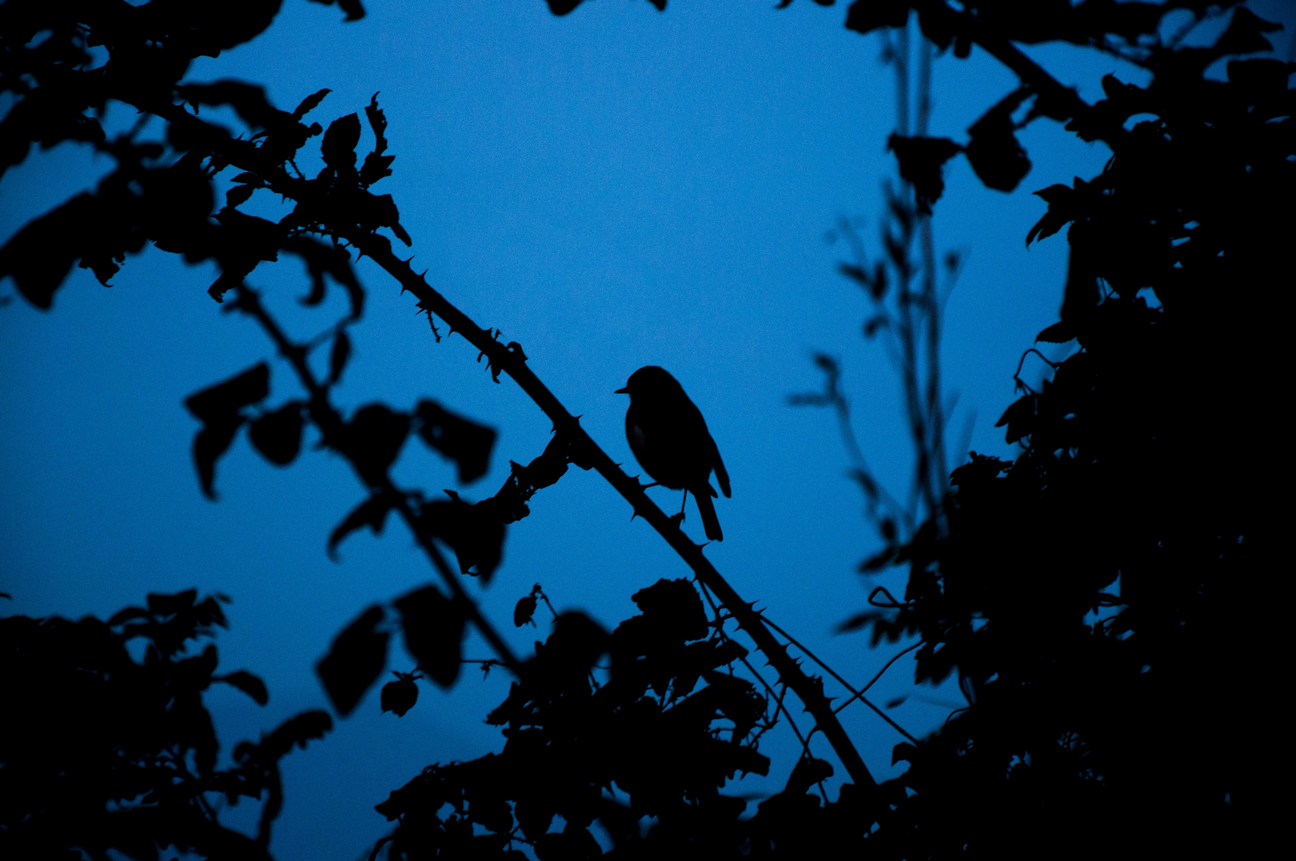 silhouette of a bird on tree branch