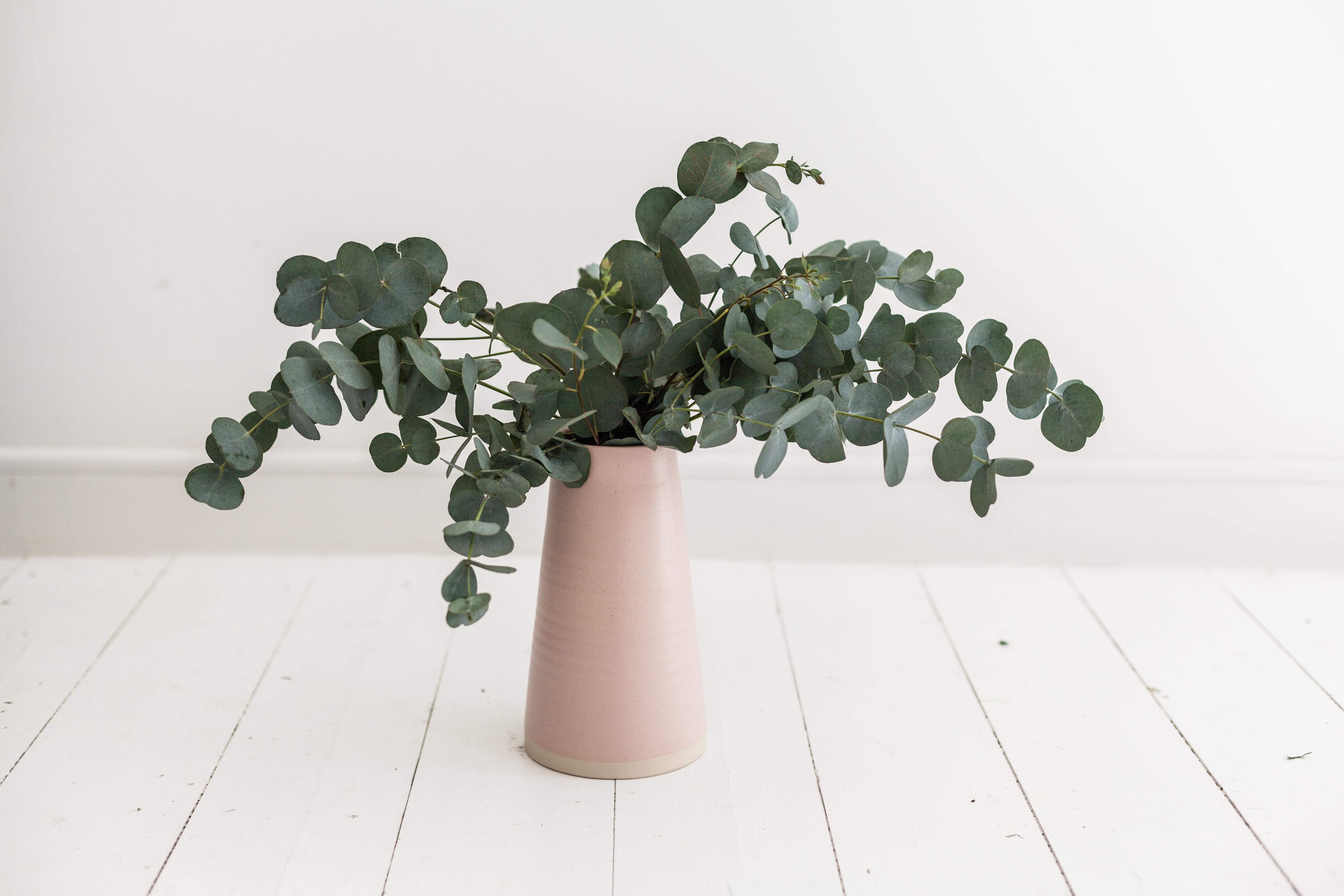 green plant in brown vsae