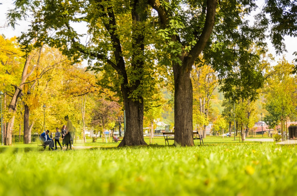 photo of people sitting on bench in park
