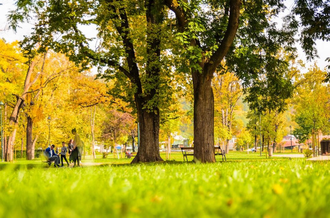 100+ Park Pictures   Download Free Images on Unsplash