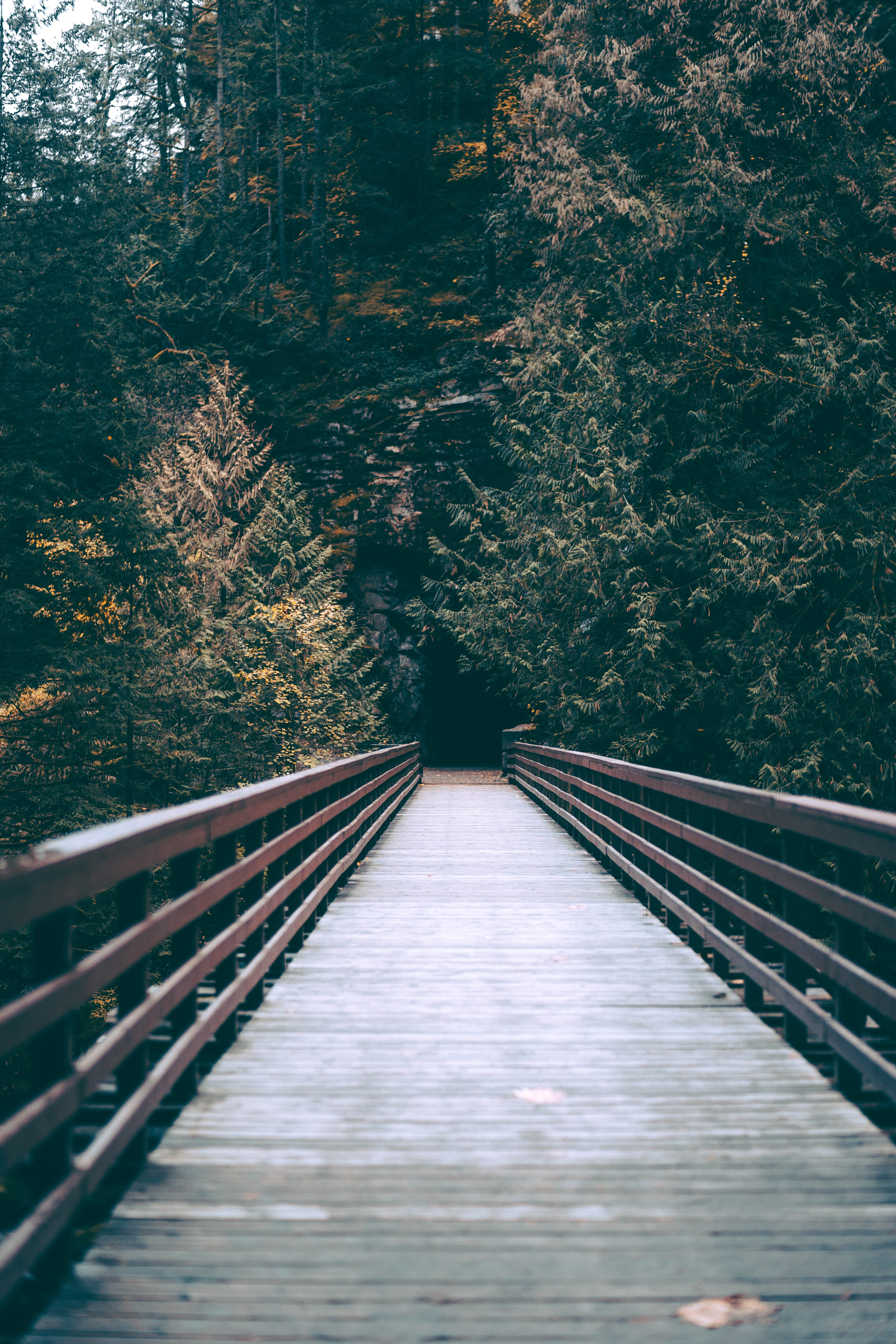tilt-shift lens architectural photography of brown wooden footbridge leading to forest during daytime