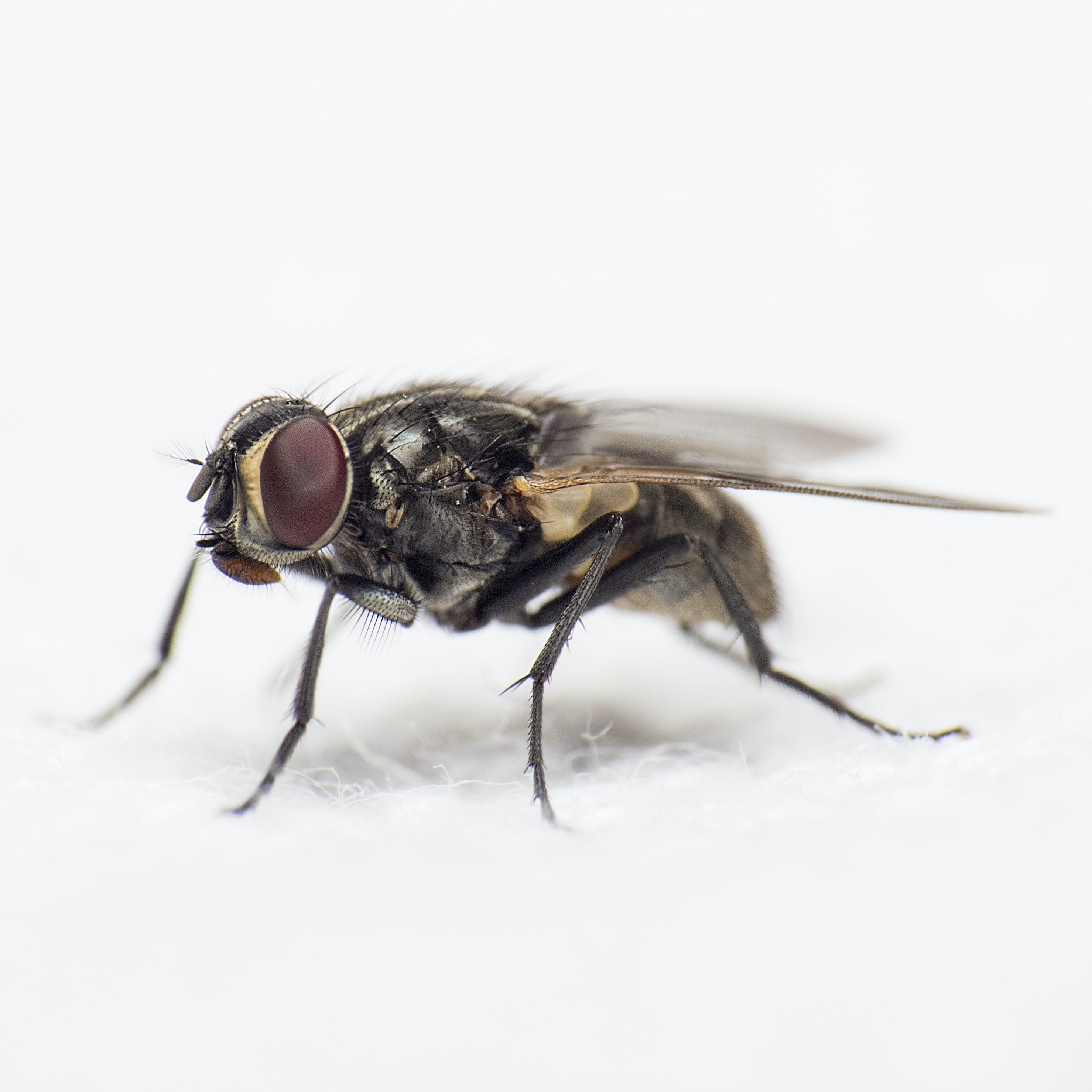 close-up photography of black common housefly