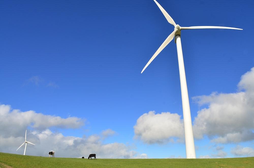 black cattle eating grass near white windmill during daytime