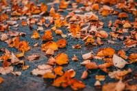 dried leaves on the floor