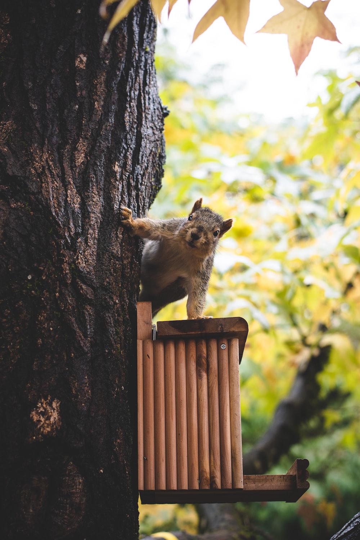 brown squirrel on tree during daytime
