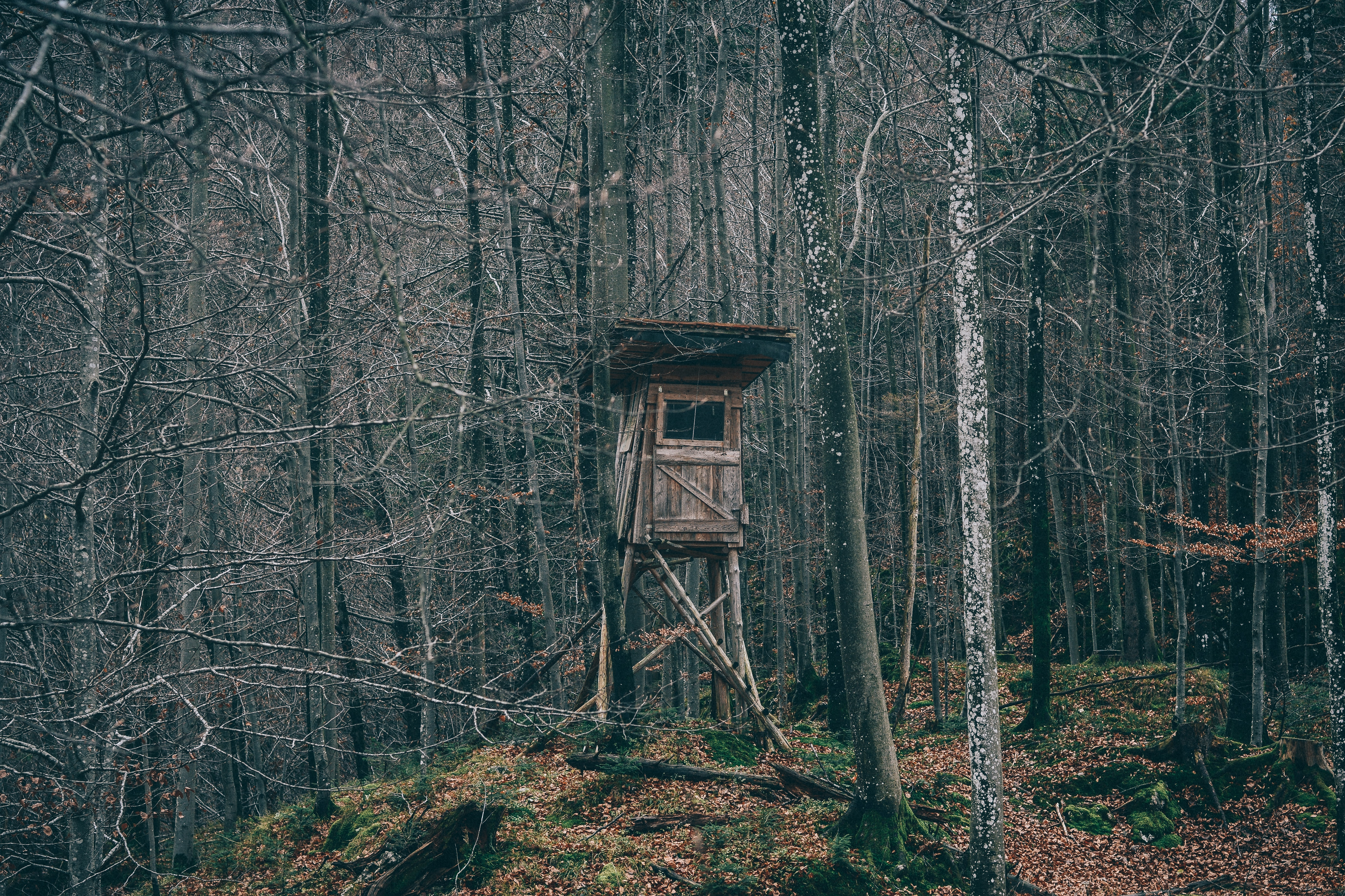 tree house in the middle of the woods