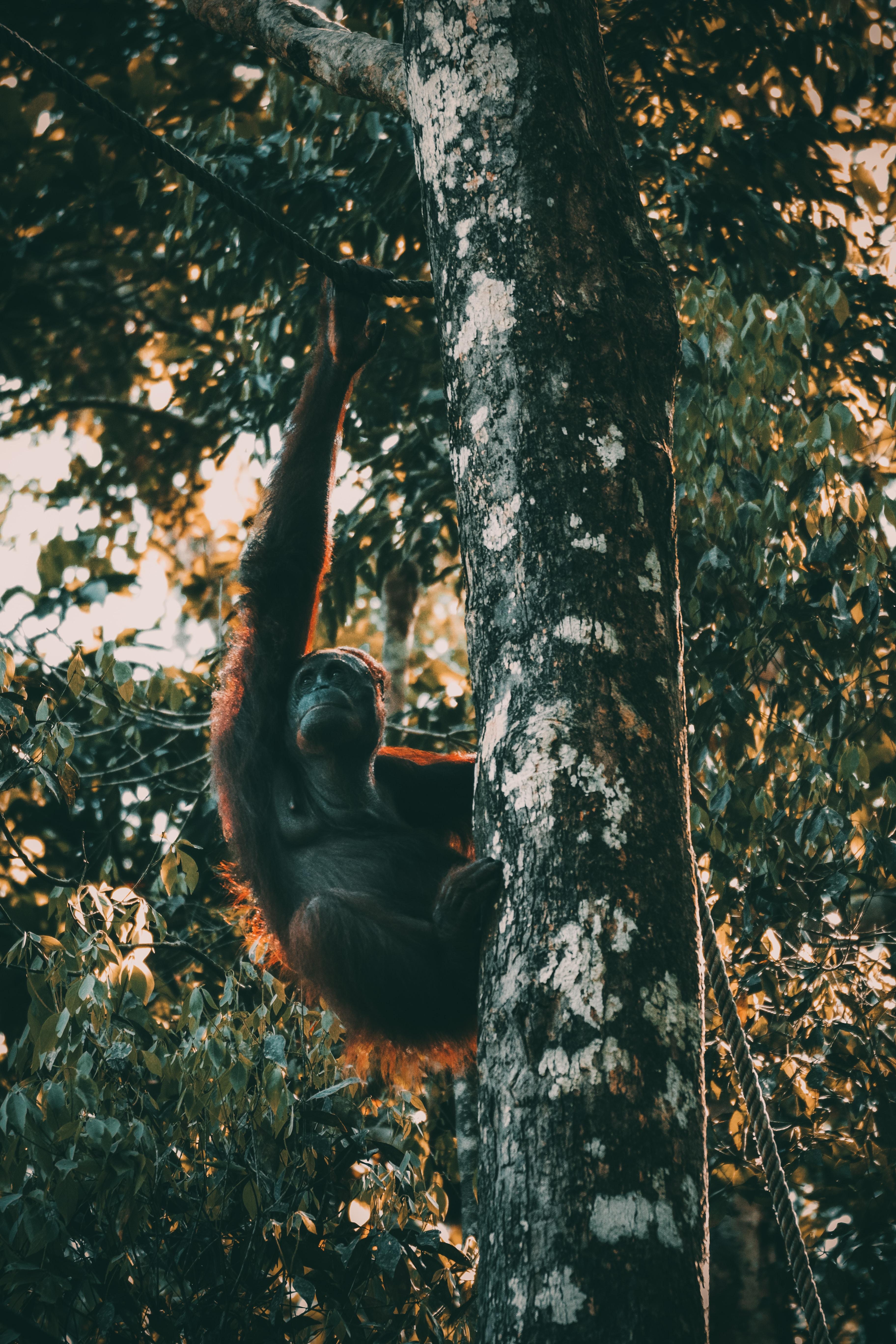 monkey on tree at daytime