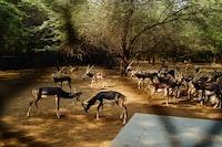 herd of deer beside tree