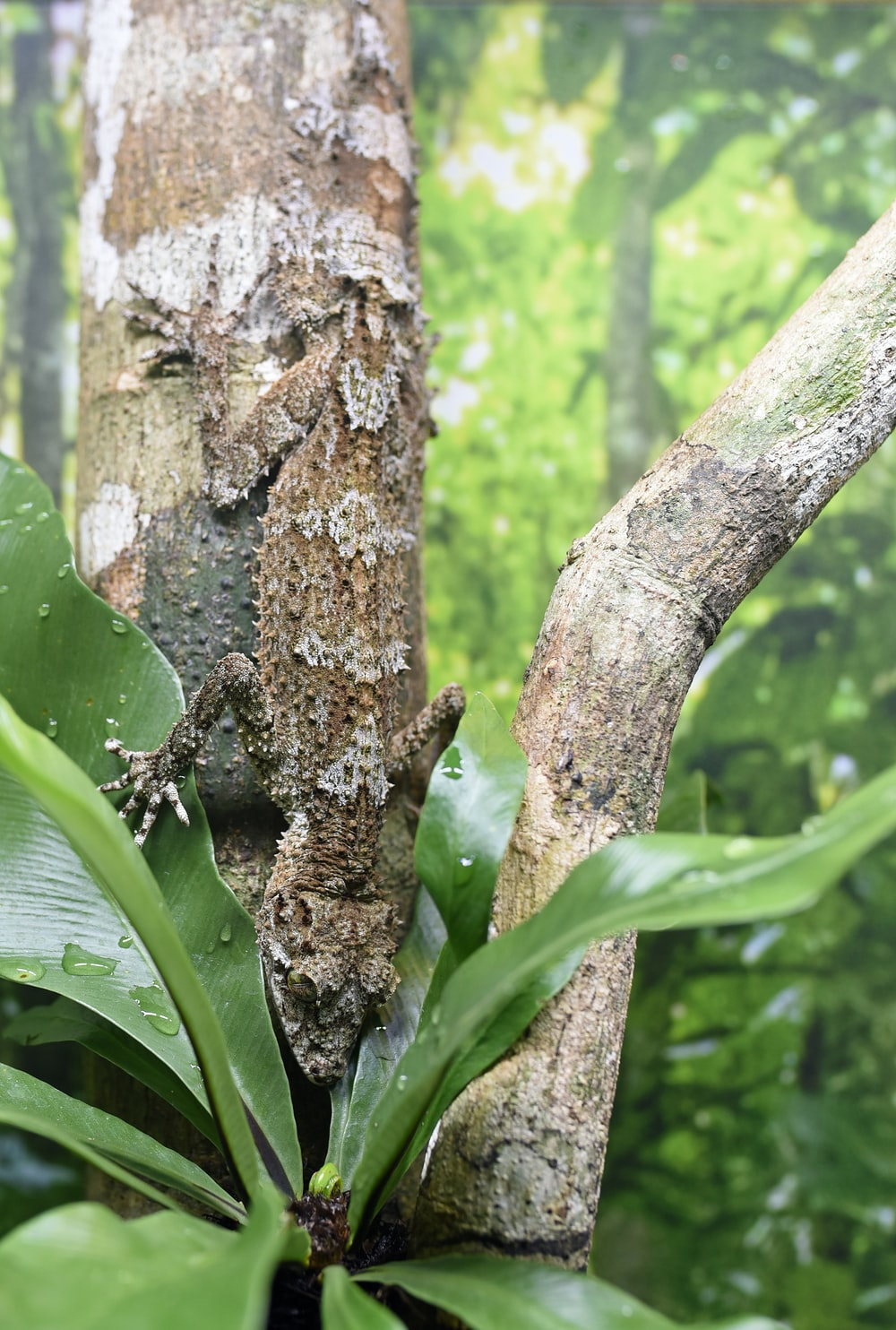 brown and black lizard on branch of tree