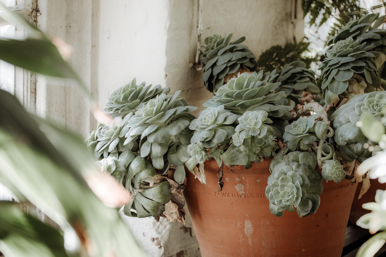 green succulent plants