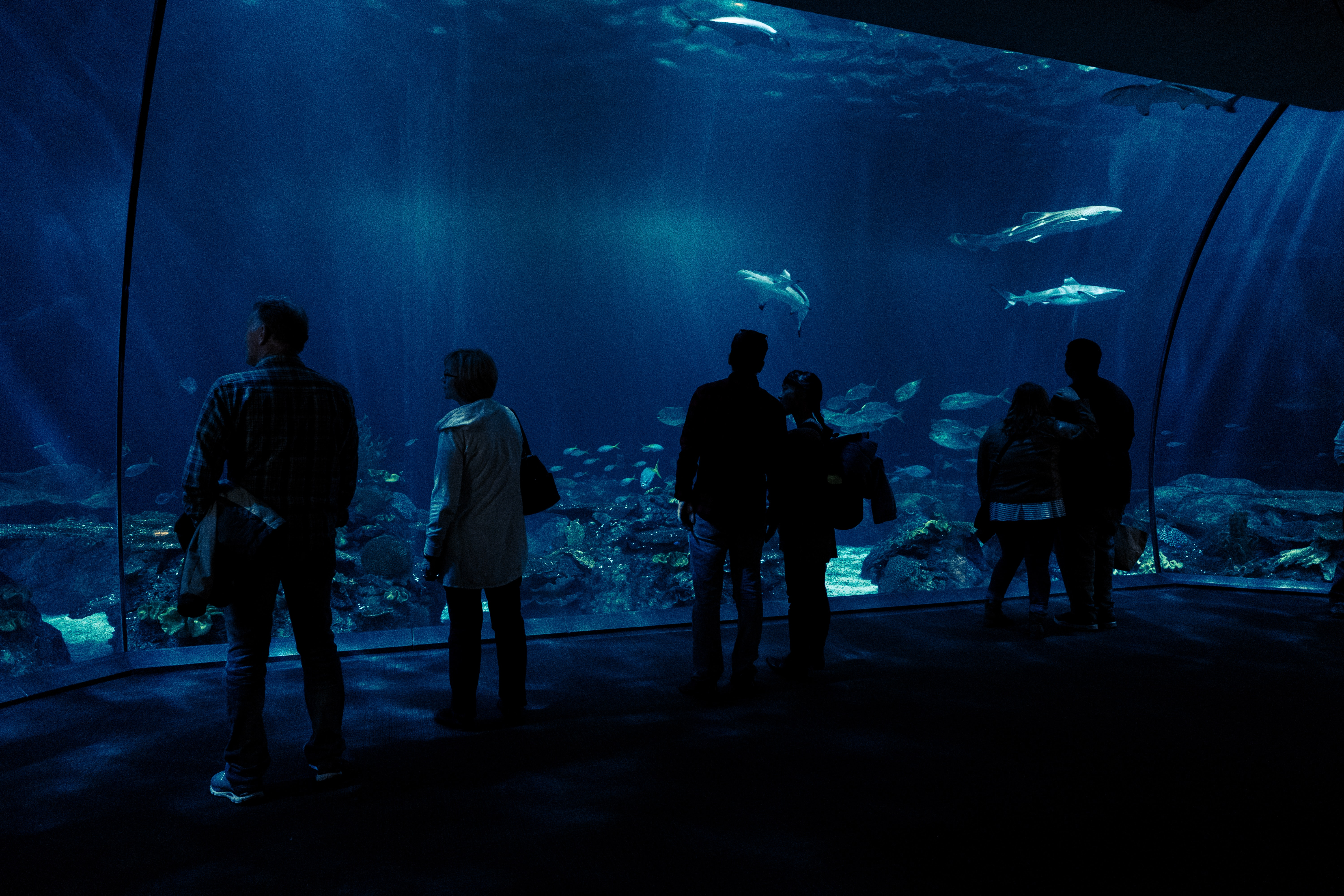 silhouette photo of group of people watching fishes on underwater aquarium