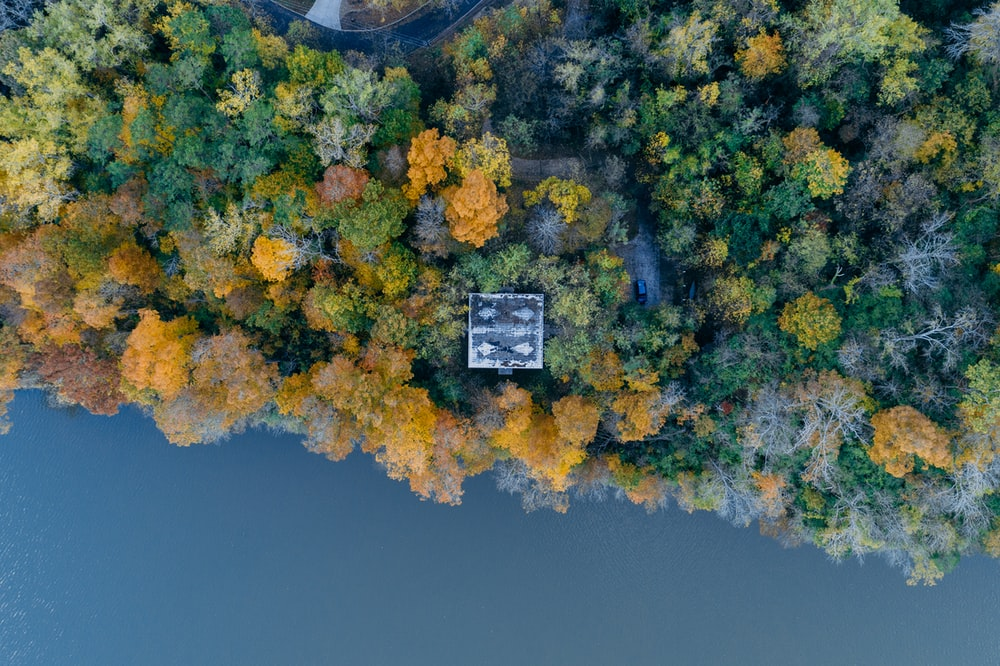 aerial photo of trees near water