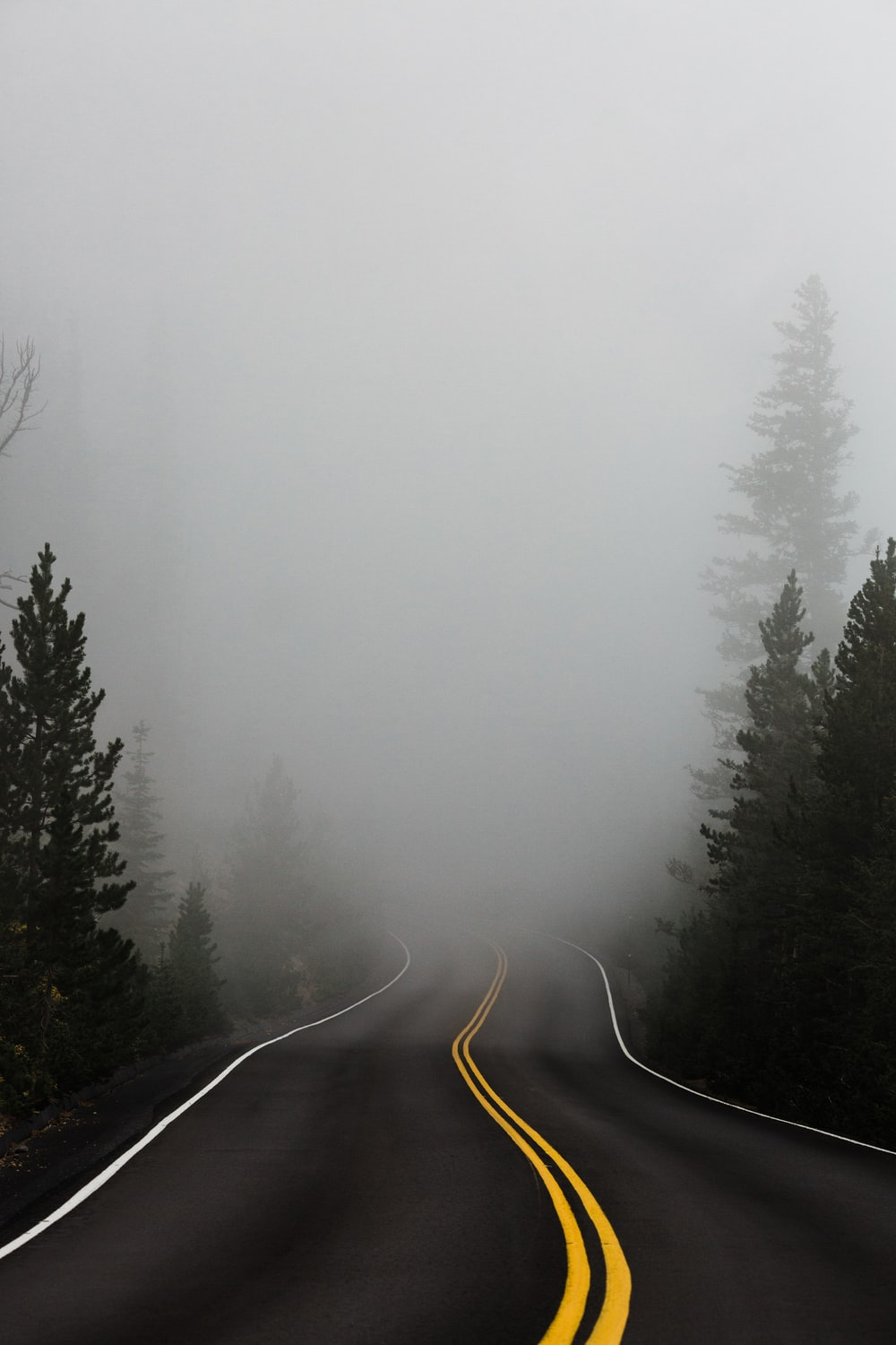 empty road surrounded with trees with fog