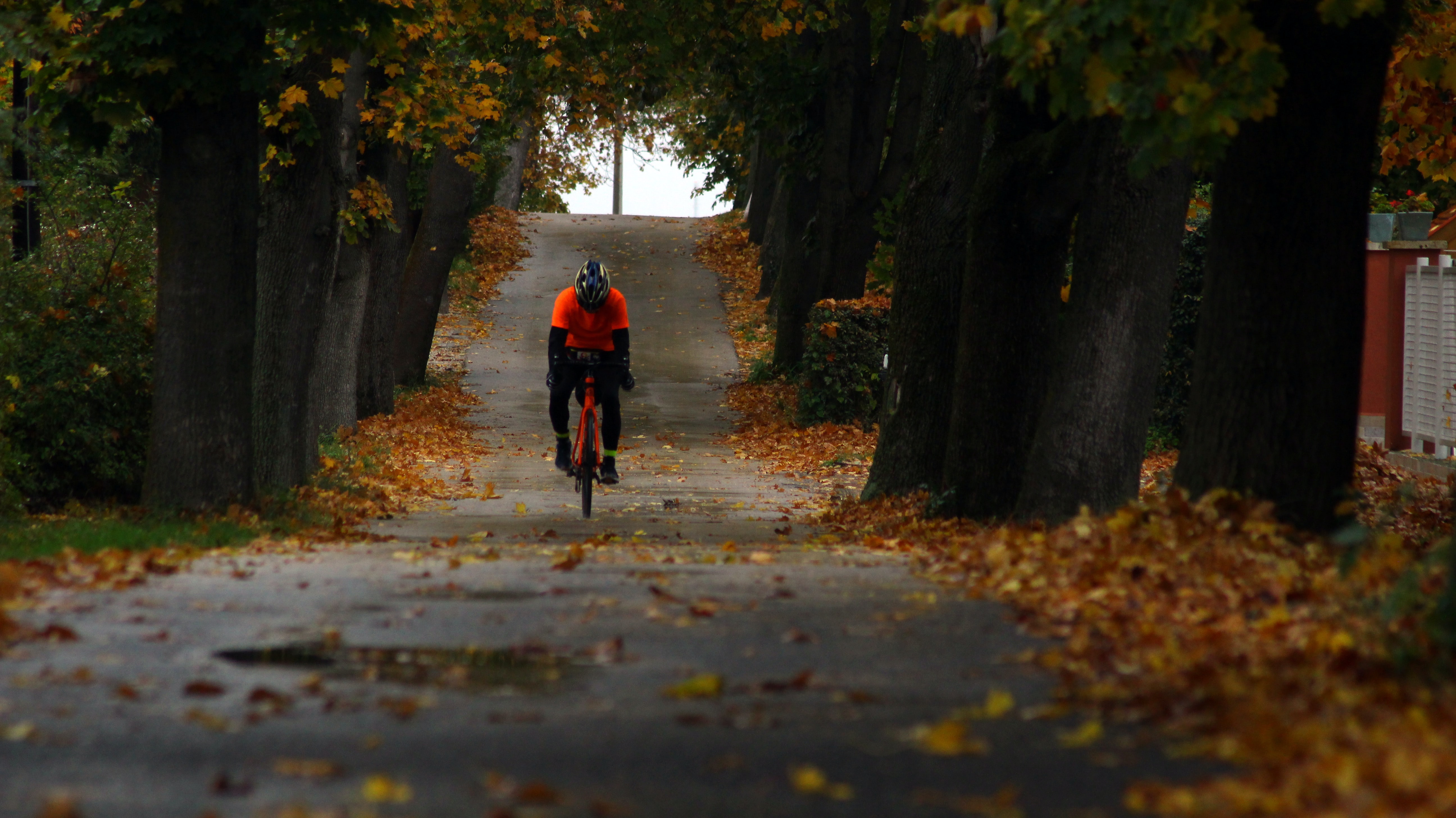 person riding bicycle between trees