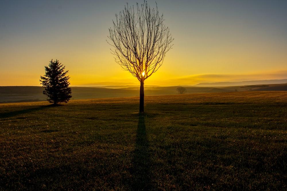 leafless tree in field
