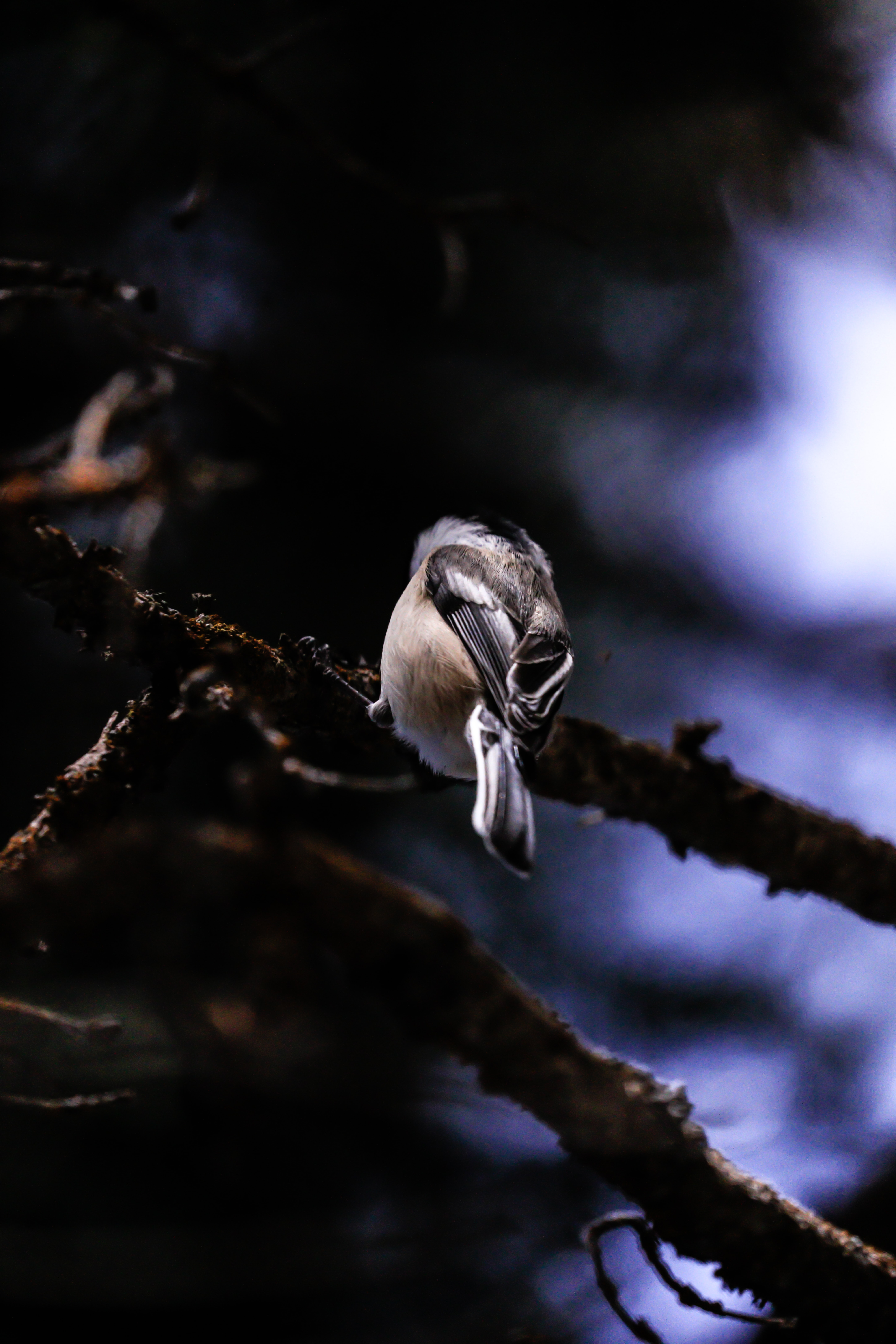 macro photography of gray bird on branch