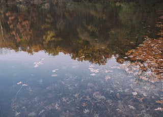 leaves in body of water reflecting treeline