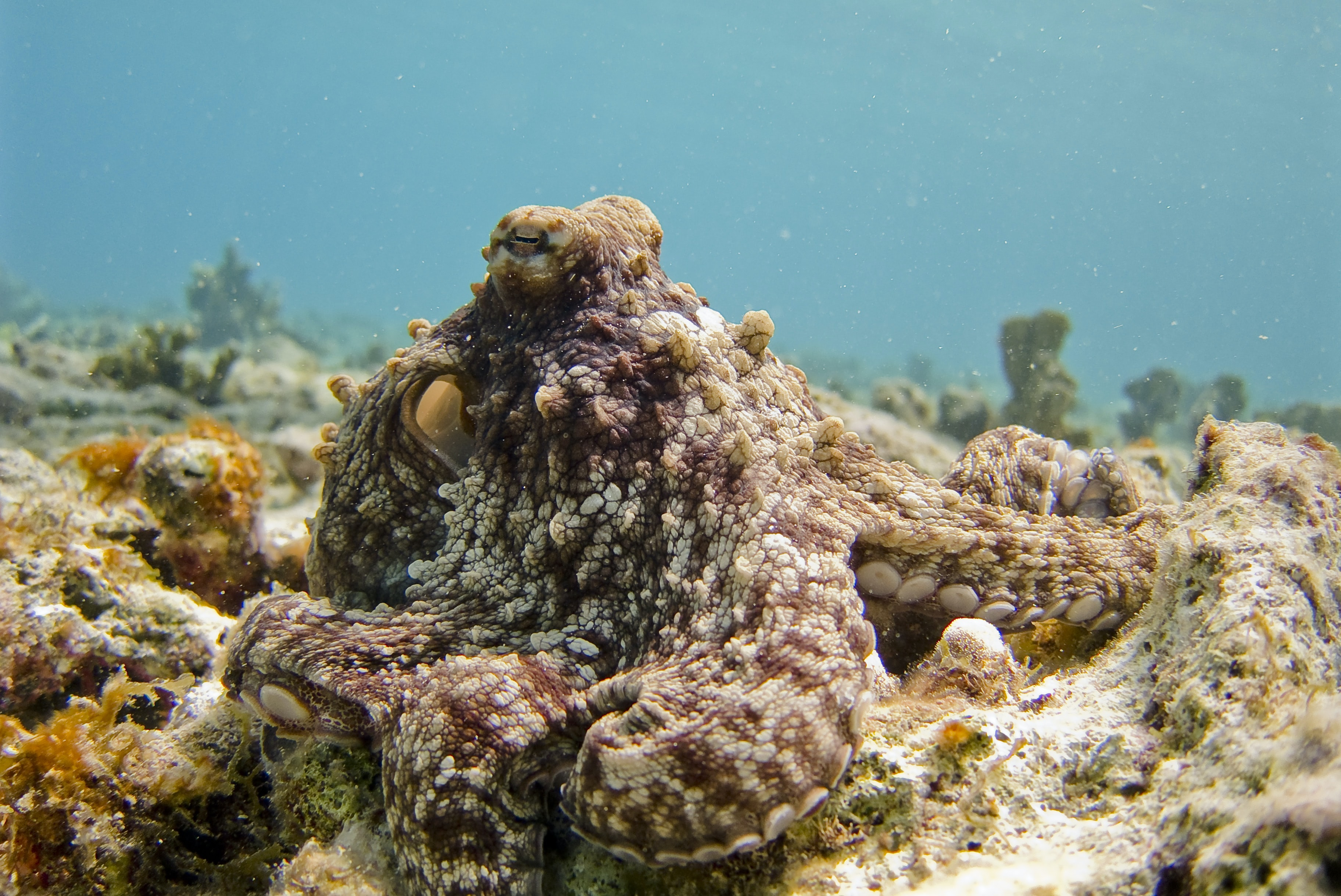 selective focus photography of octopus