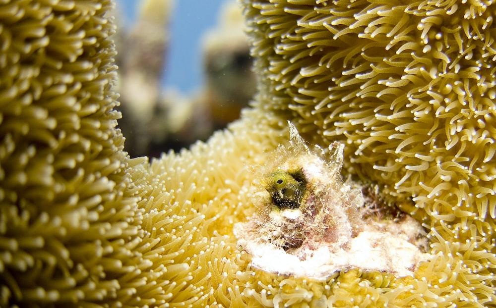 closeup photo of brown coral underwater