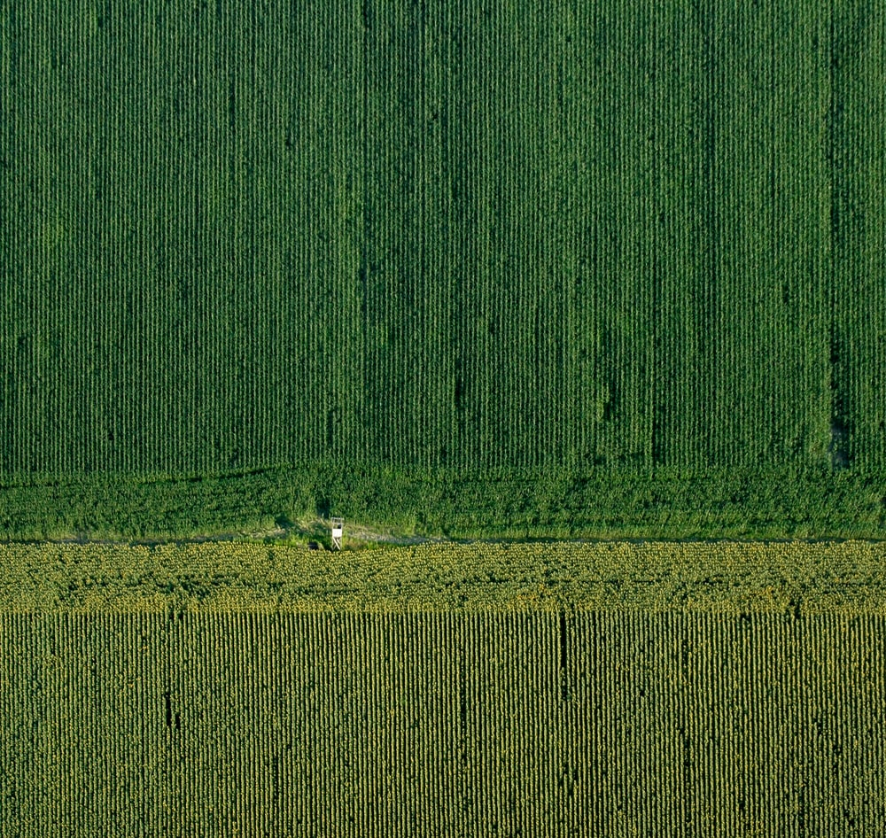 aerial photography of grass field
