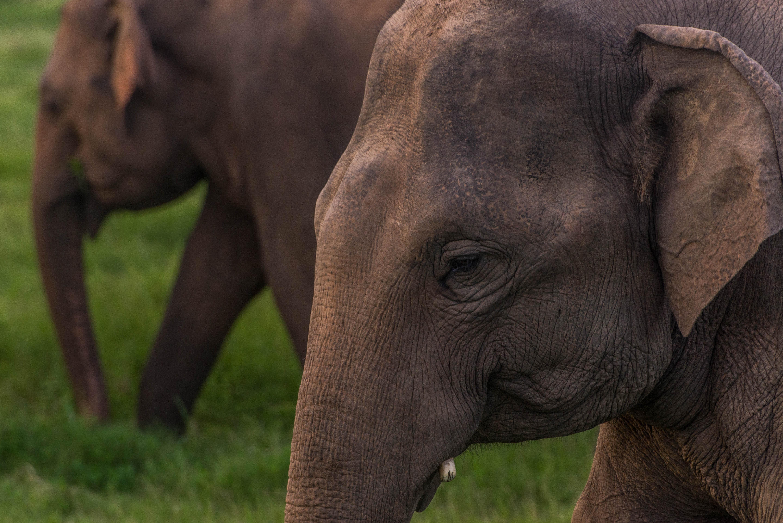 elephants walking on the grass