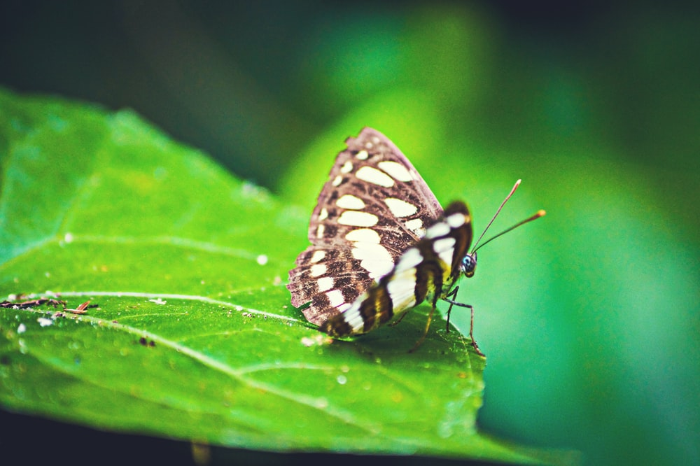 selective focus photography of black and white butterfly on green leaf