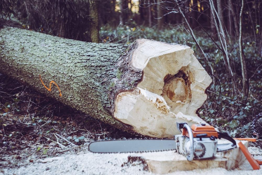 chainsaw near tree log