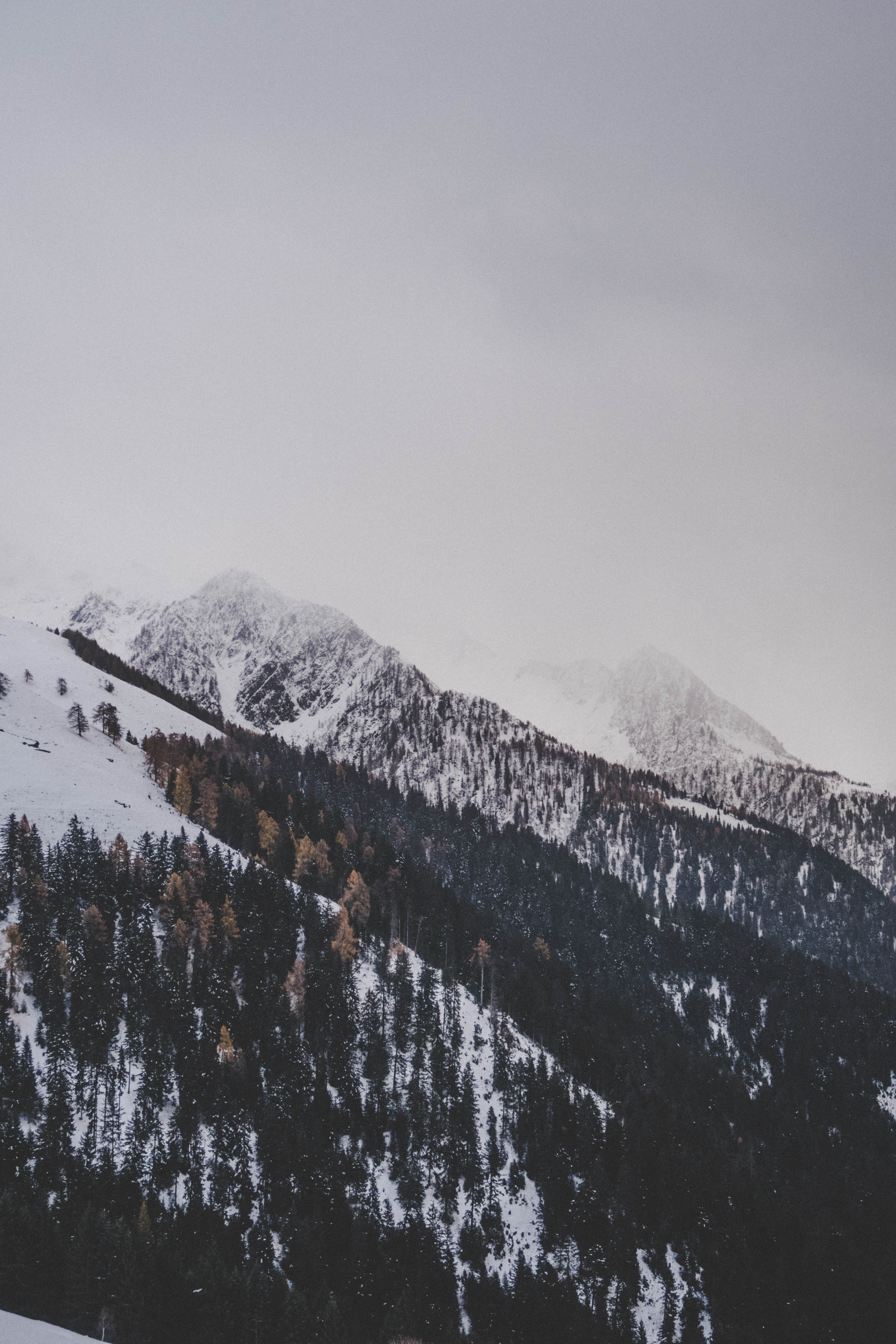 mountain covered by snow and trees