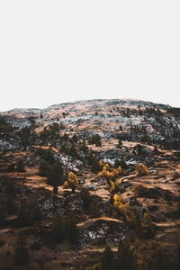 pine trees on brown mountain during daytime