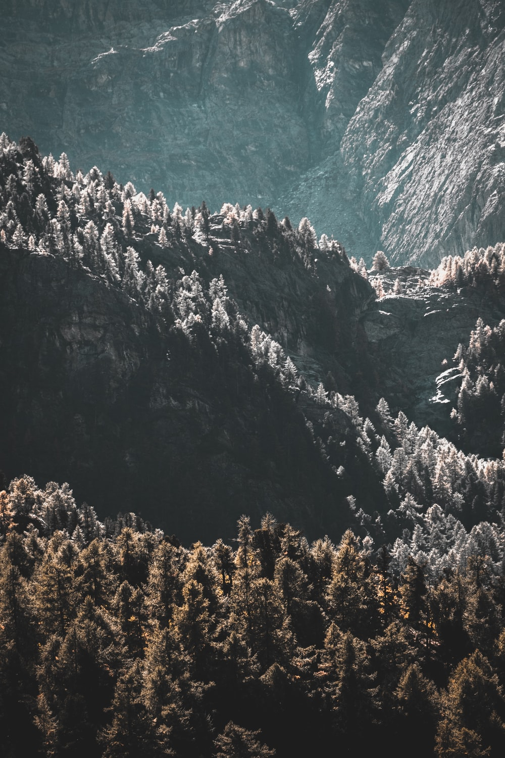 Aerial Photography Of Trees And Mountian