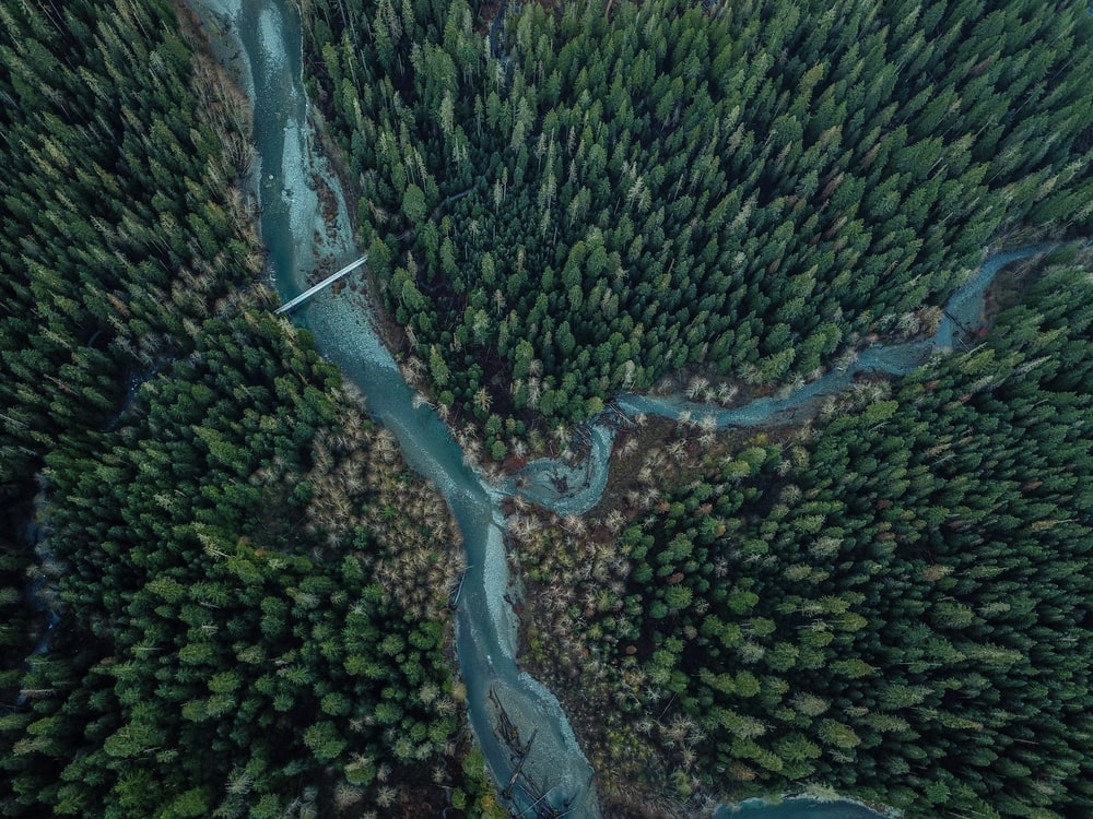 bird's eye view of river and green trees