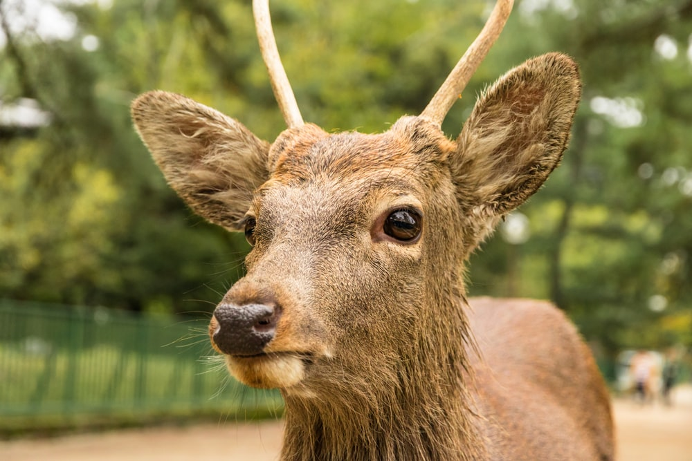 brown deer during day time