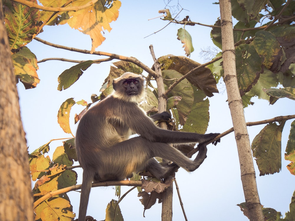 black and white primate sitting on tree branch
