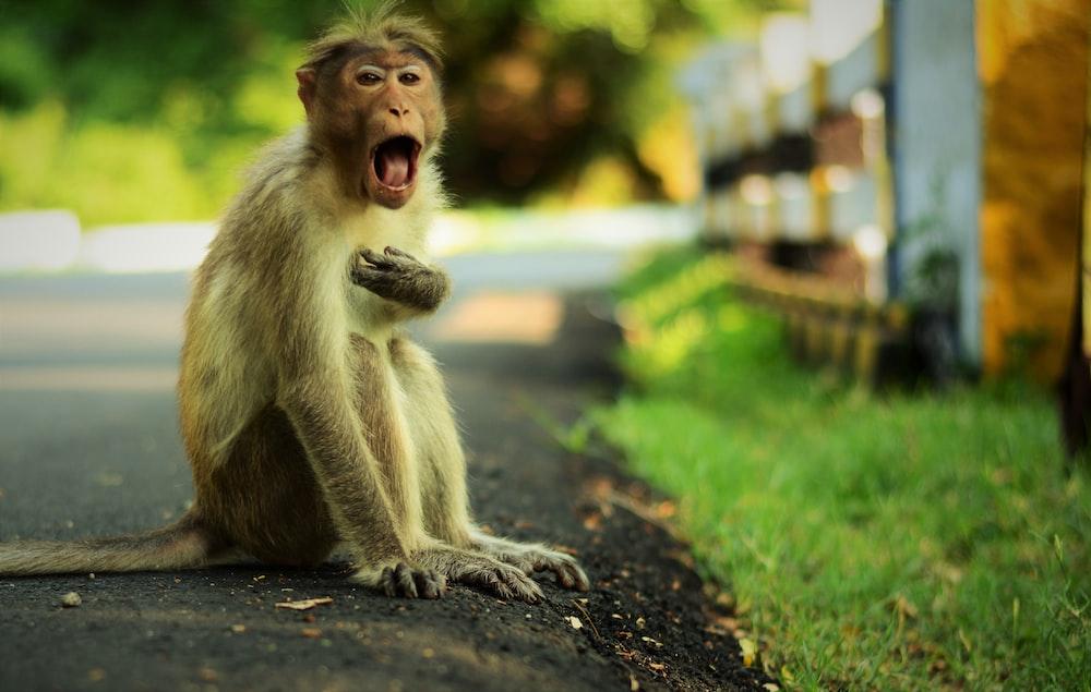 brown monkey sitting near green grass field