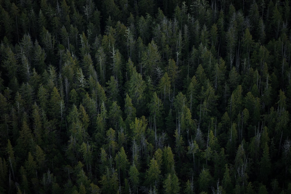 aerial view of tall trees