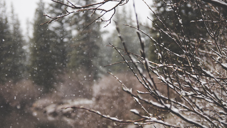 macro shot of snow and bare tree