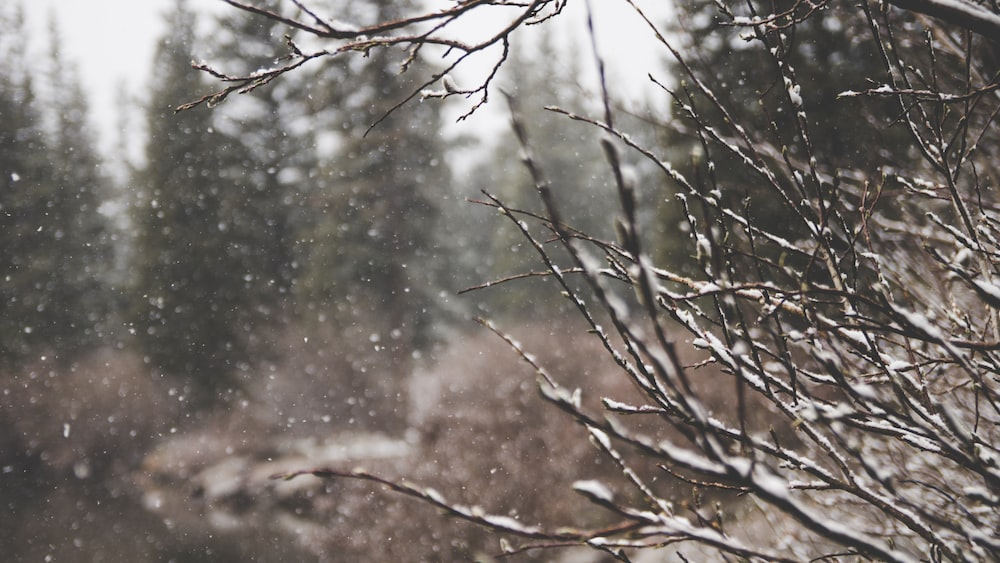 macro shot of snow and bare tree