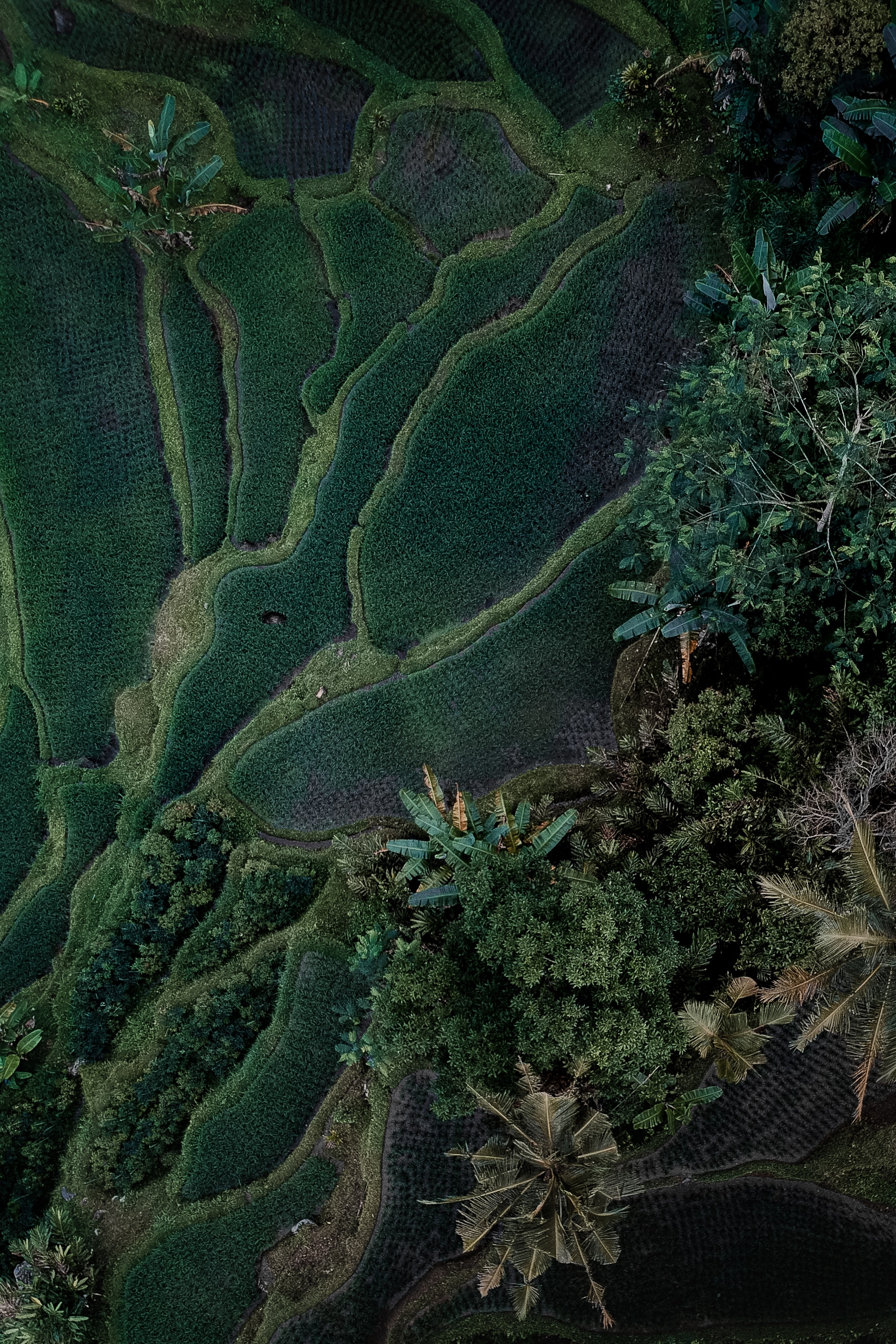 aerial-view photography of green tree lot