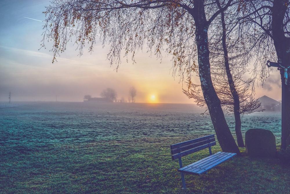 blue wooden bench on grass near tree
