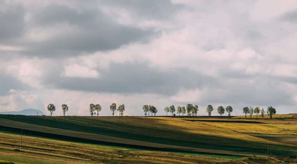 green trees on top of hill
