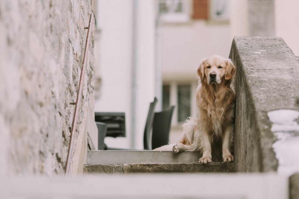 dog on concrete stairs