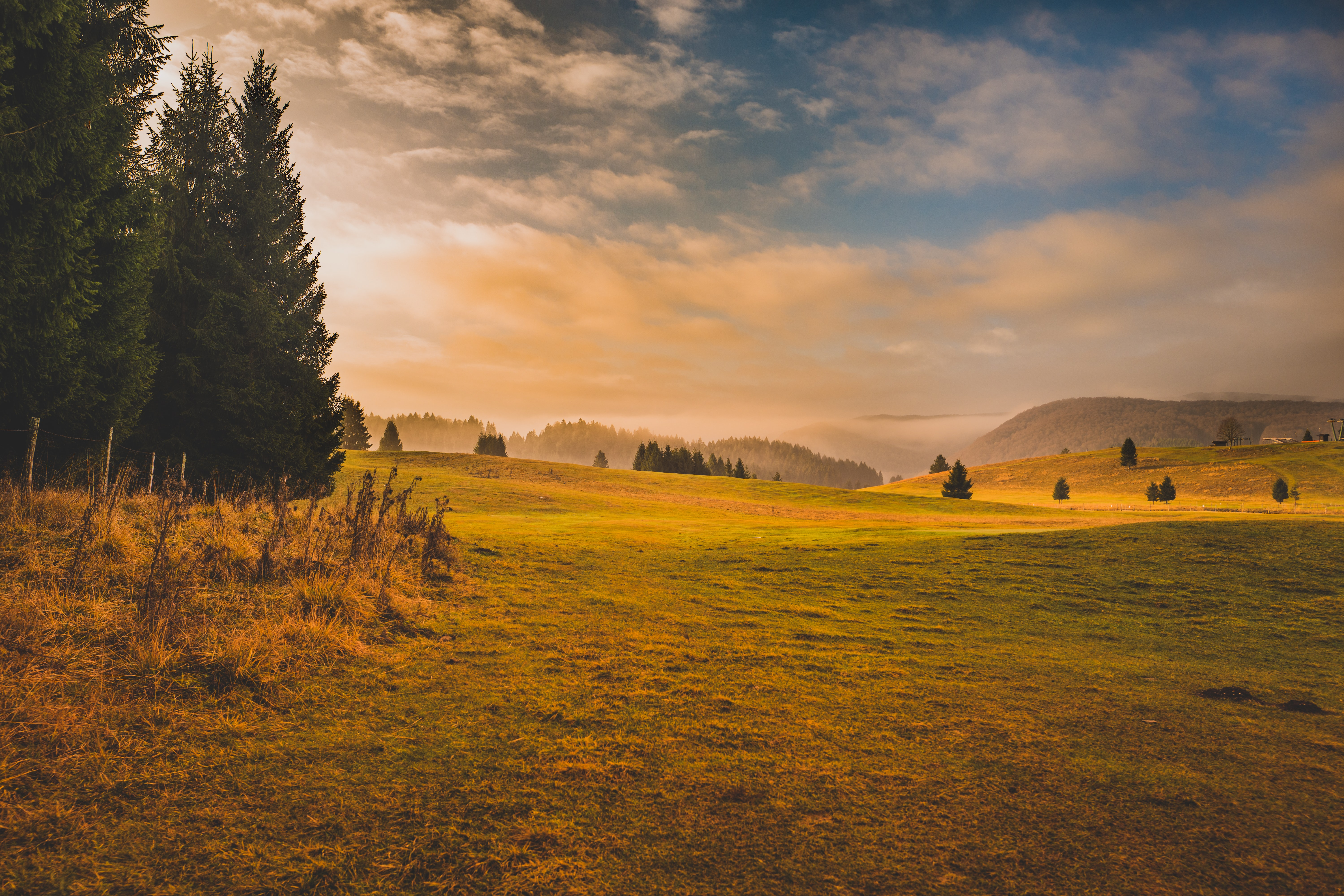 grass field and pine trees during golden hour
