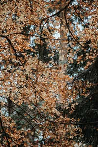 closeup photo of brown leafed tree
